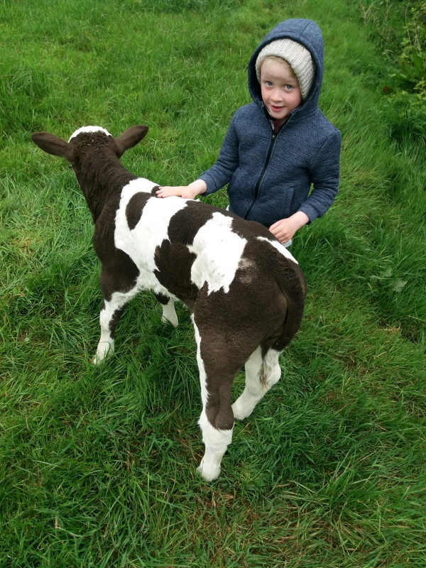 Farm Week in Ballyheerin