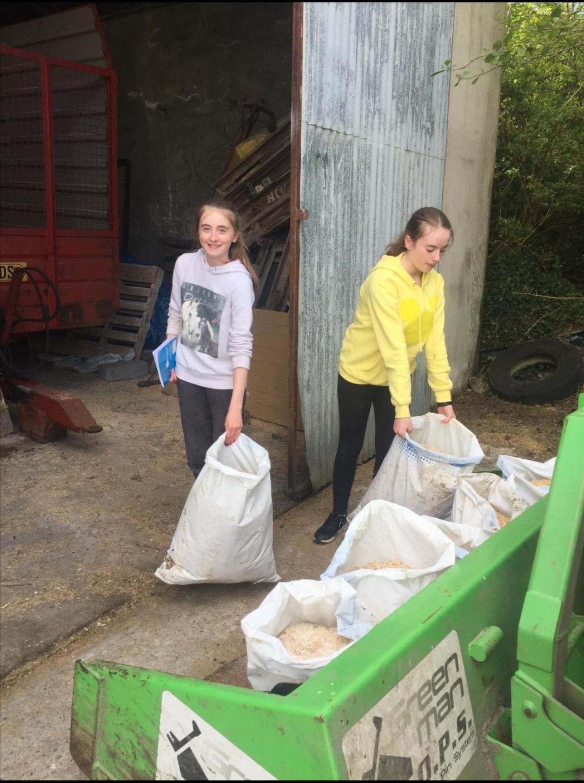 Farm Week in Ballyheerin 😁🐄🐑🐖👨🌾👩🌾